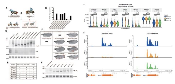 RNA preprints: W43/2018